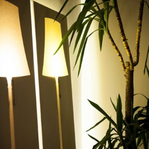 plant with ambient light in the third floor flat of aplace antwerp