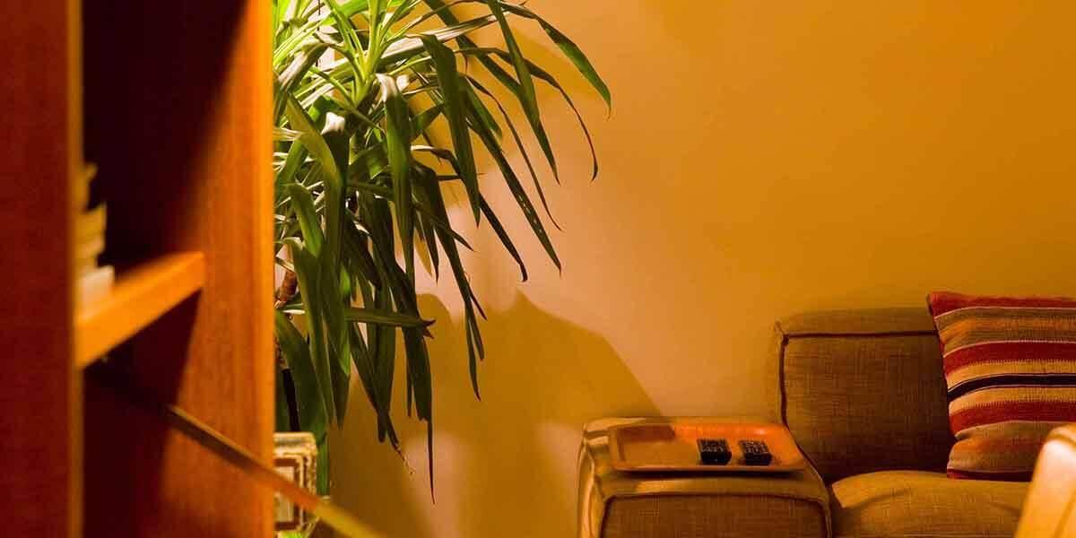 sfeerbeeld van derde verdieping flat van aplace antwerp met kamerplant en bank met sierkussen